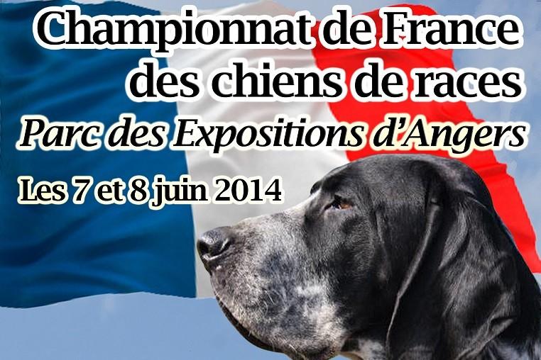 Championnat de France SCC 2014